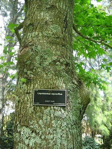 botanic plant id signs